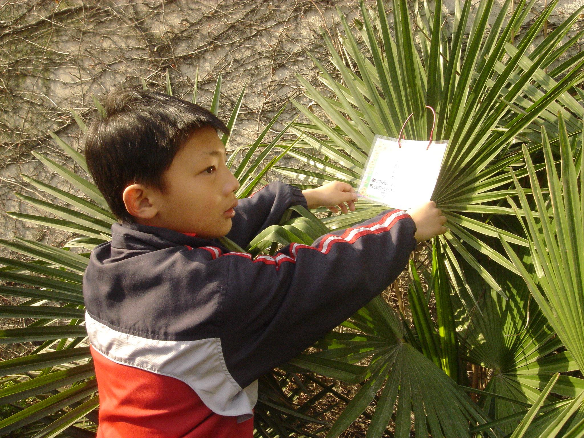 给校园植物挂牌